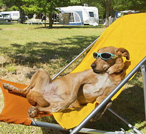 funny dog with sun glasses in stroller